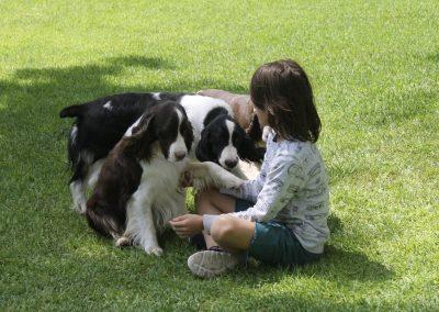 Nuestros perros con la familia