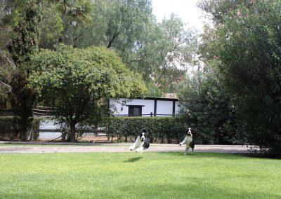 Jardín del criadero
