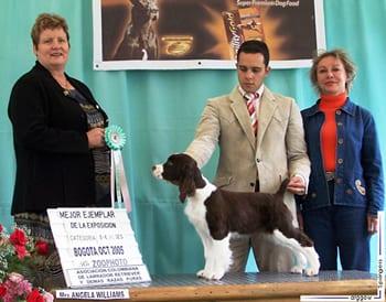 Cachorro springer ganando premio en colombia