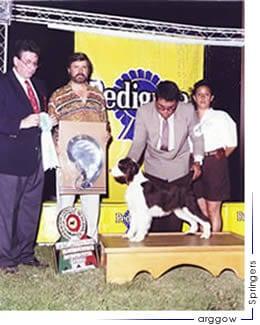 Kawin Pride of Arggow ganando Cachorro B