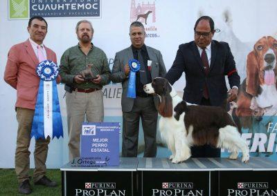 Perro springer ganando premio al mejor perro del estado